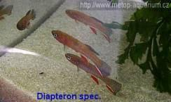 Diapteron spec